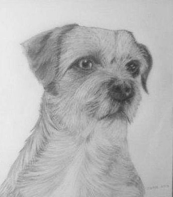 Border Terrier by Olive Wade sm