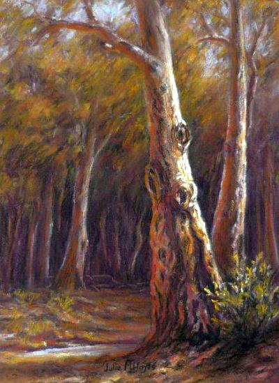 Bunyeroo Valley Gums by Julie Hayes sm