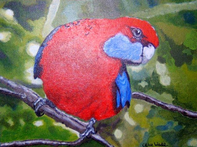 Crimson Rosella by Olive Wade sm