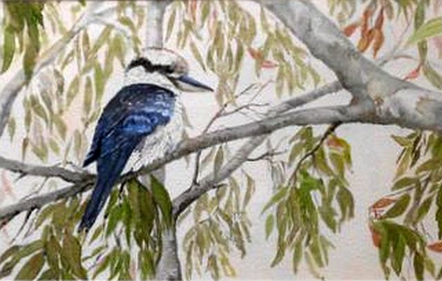 Kookaburra Sits by Jan Harman watercolour framed 48cm x 34cm unframed 32cm x 22cm  $180