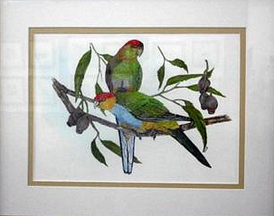Red-Capped Parrots by Ron Brook SANY0027