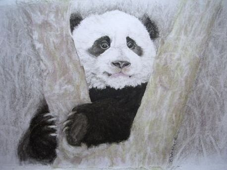'Peeking' Panda by Beth Wreford sm