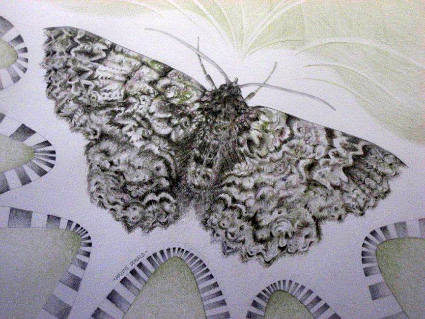 IMG_0089 Migrating Moth Maxine Donald Pencils 60cm x 55cm Framed  $300 sms
