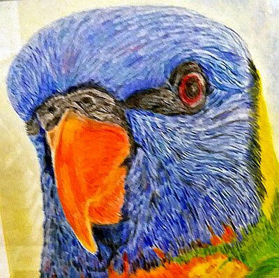 Rainbow Lorikeet by Olive Wade